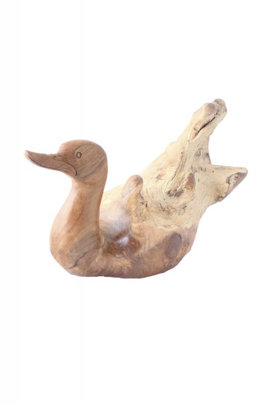 kachna-samorastová